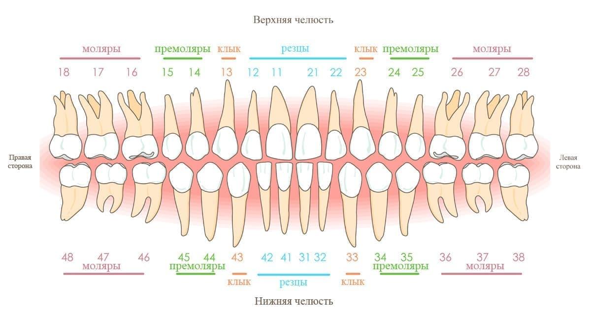 зубы по номерам в стоматологии схема