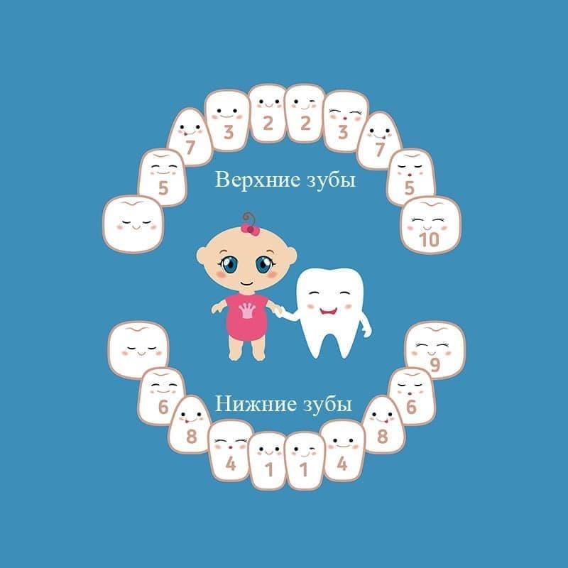 Схема молочных зубов у ребенка: верхняя и нижняя челюсти.
